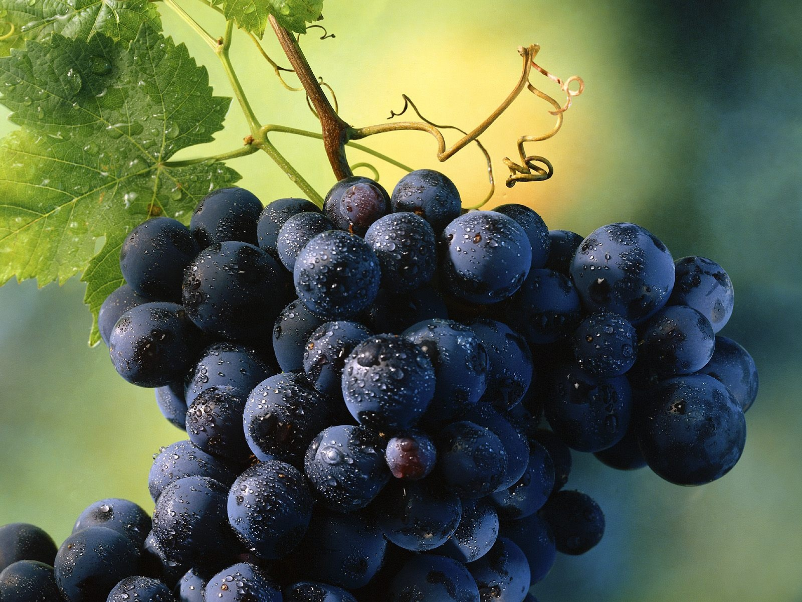 Fresh-Grapes-HD-Wallpapers-8